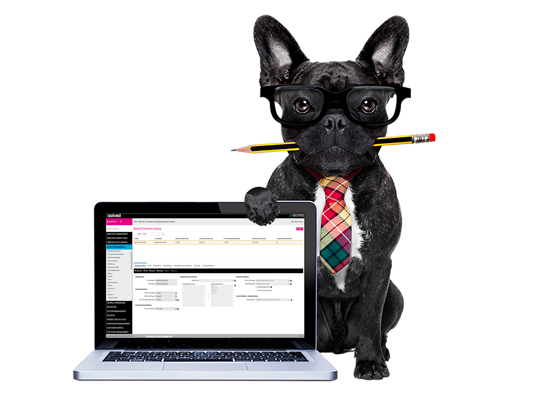 Beneftis-cost-analysis-dog